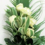 White Rose Natural Tied Sheaf